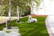 pet-friendly-artifical-grass