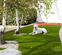 Pet Artificial Grass Installation